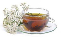 yarrow tea fever cures