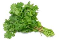 coriander leaves benefits