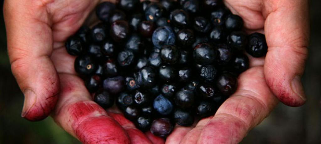berries healthy brakfast