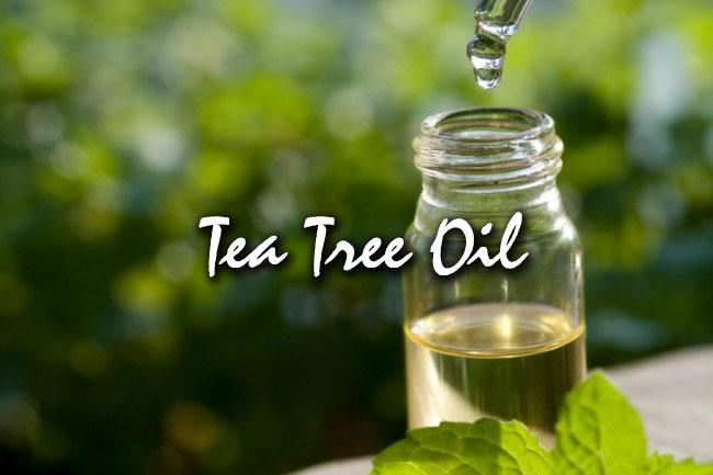 tea tree oil for hair care